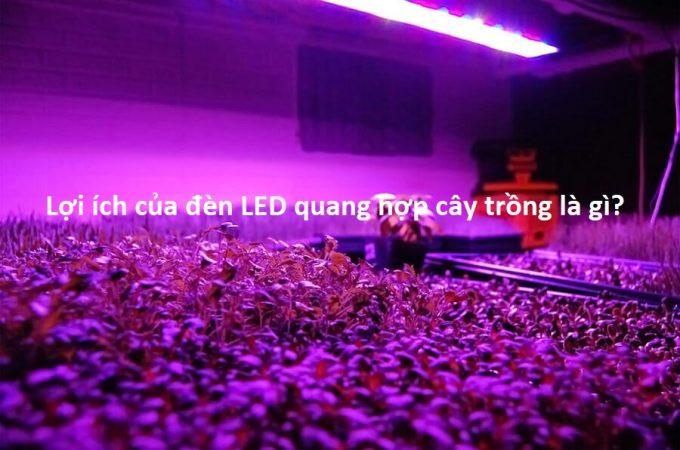 Lợi ích của đèn LED quang hợp cây trồng là gì?