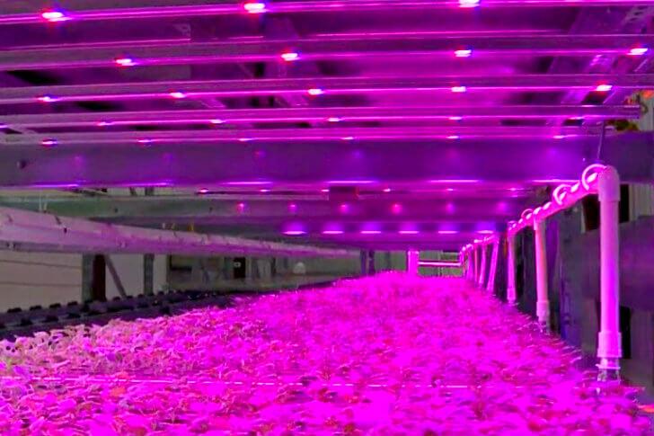 đèn quang hợp trồng rau trong nhà bóng LED