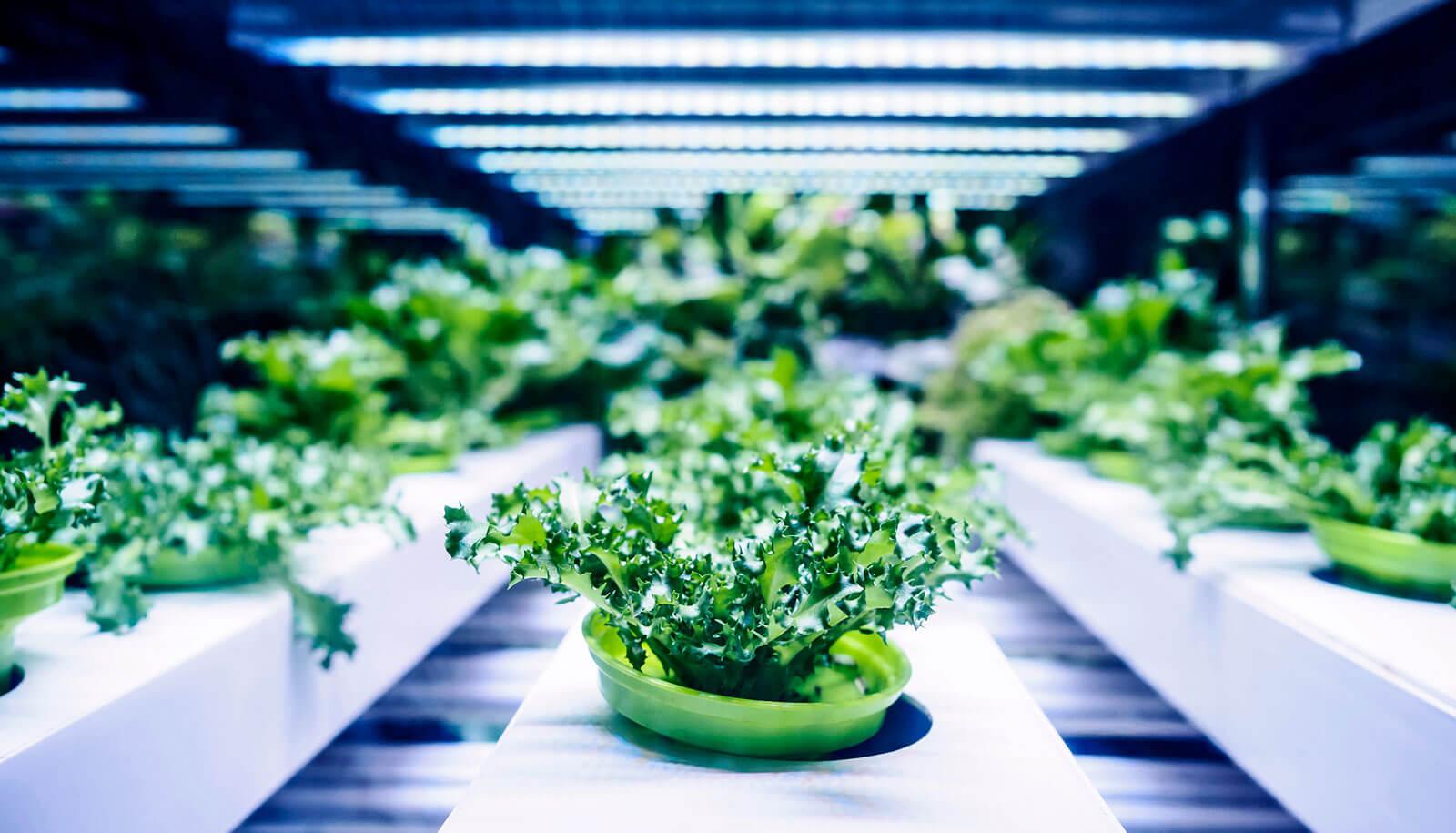 đèn quang hợp trồng rau