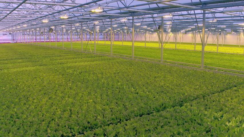 Canh tác nông nghiệp trong nhà kính