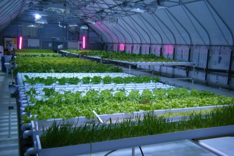 đèn led quang hợp cho cây trồng