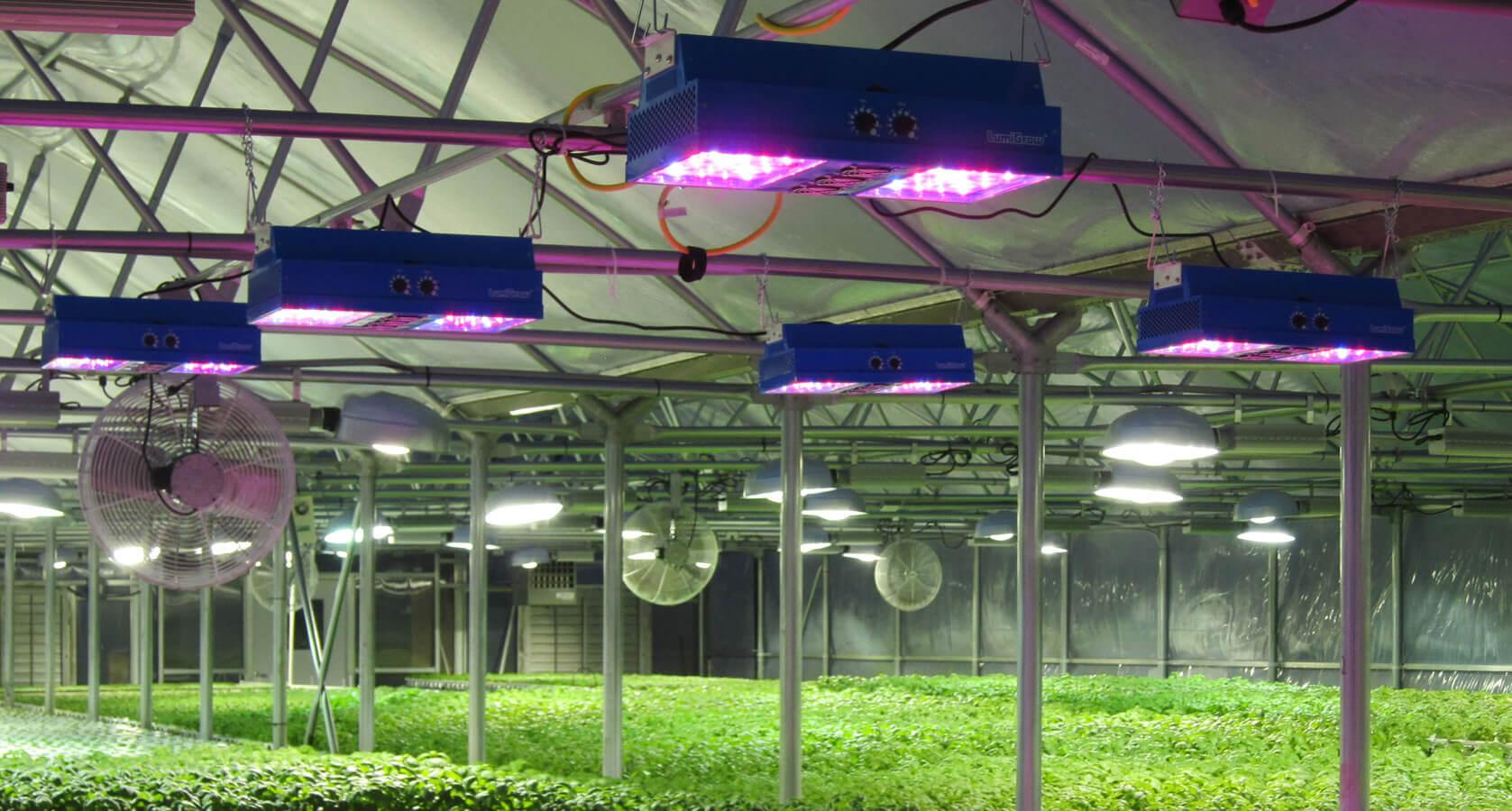 đèn led quang hợp cho cây